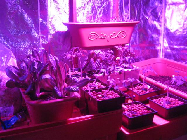 Top Houseplants Suspended Grow Lights
